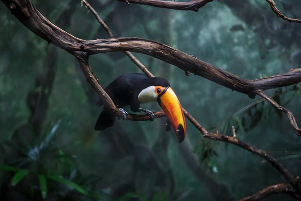 Woodland Park Zoo (Seattle, WA)