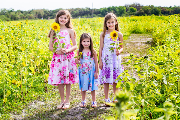 Velazquez Spring Sunflower Session