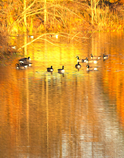 Ducks of Autumn.jpg