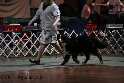Sweeps 6-9 Puppy Dog BMDCA 2013