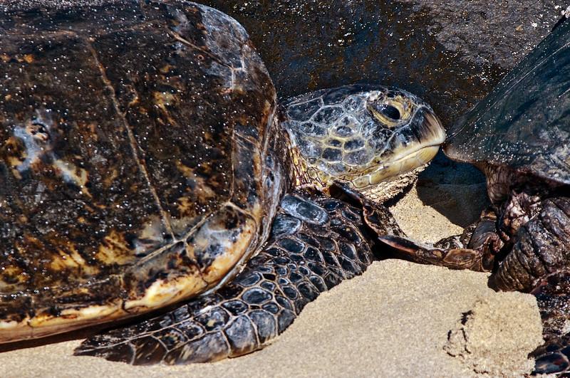 Turtle Bay Oahu-8774.jpg