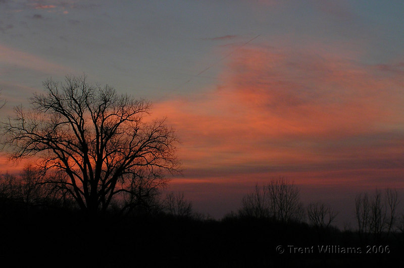 Trent_b0331p0v_sunrise_pink_tree.jpg