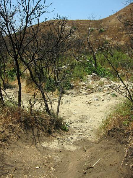20100710050-Doc Larsen Trailwork CORBA.JPG