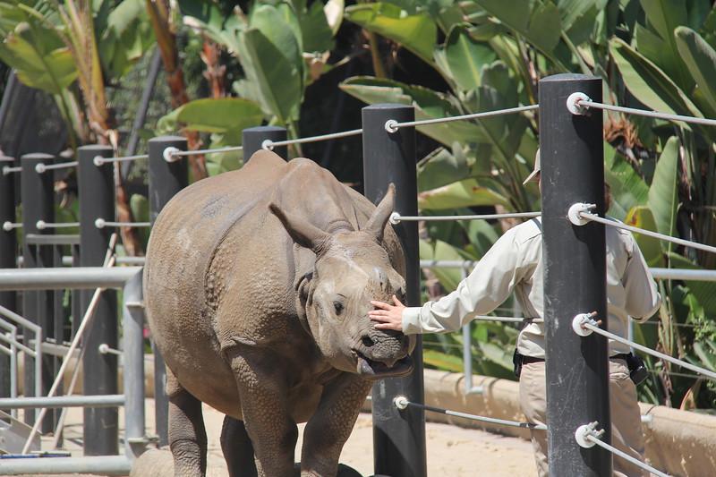 20170807-058 - San Diego Zoo - Rhinoceros.JPG