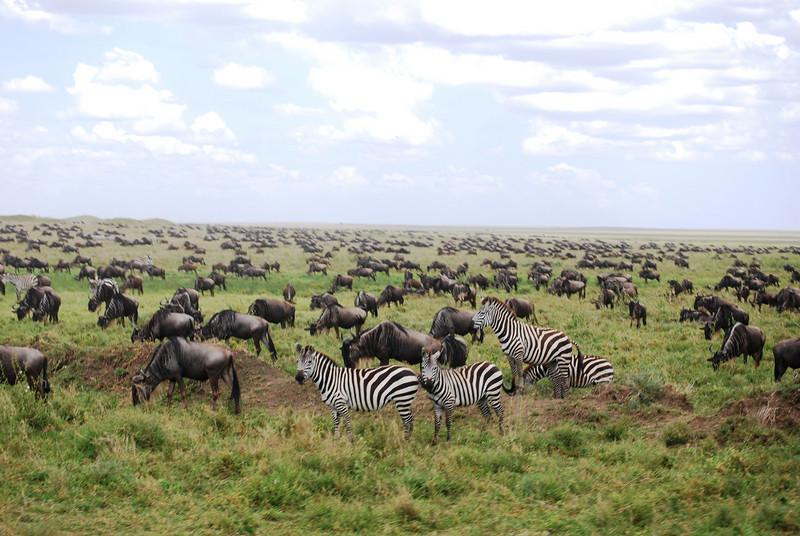 Serengeti (64).JPG
