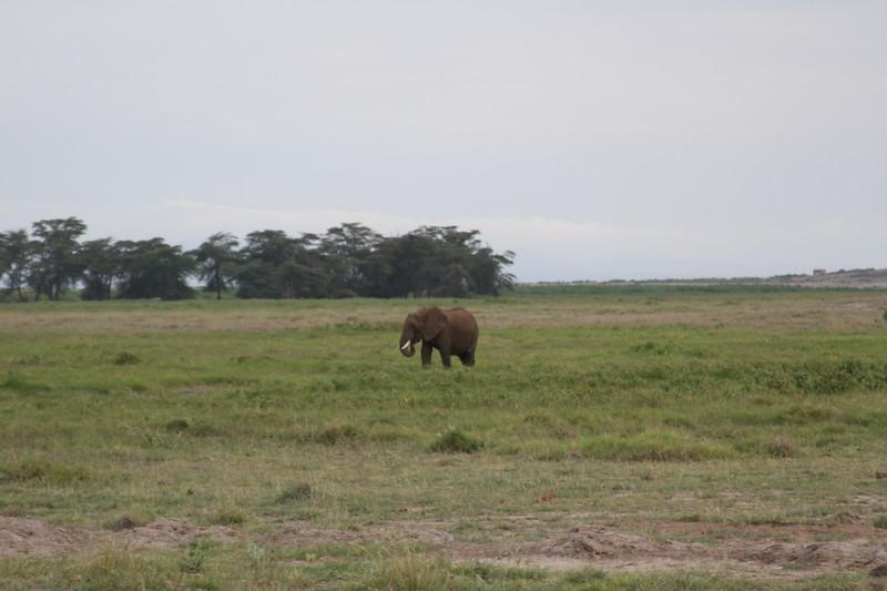 Kenya 2019 #2 272.JPG