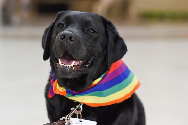 HFWB Therapy Dogs Pride Bandana