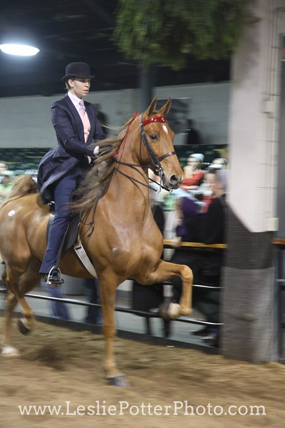 2011 Tattersalls Saddlebred Sale