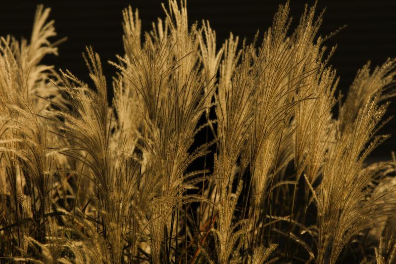 grasses1.jpg