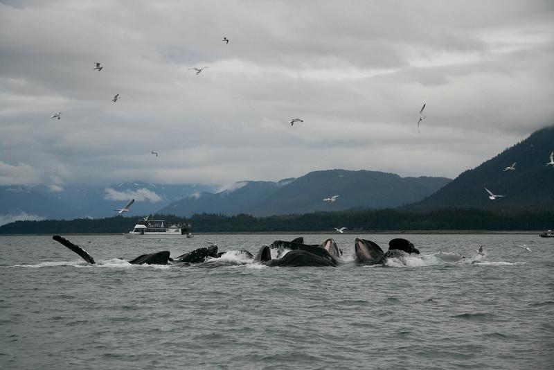 Alaska 2009-367-2.jpg