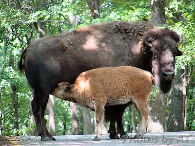 Lone Elk Park 2004