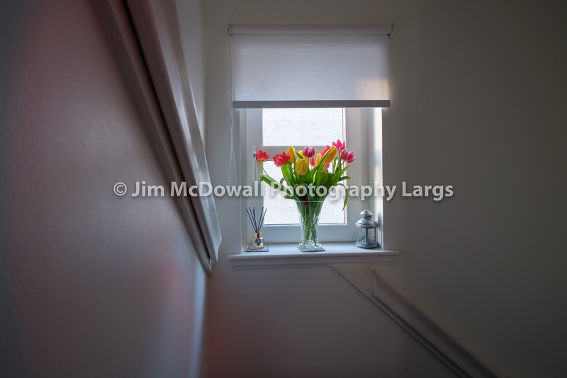 Rainbow Tulips at the Top of a Stair at a Small side window in a Modern Home in Scotland.
