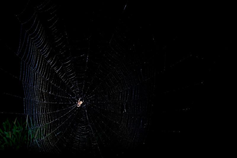 Spiderman-82.jpg