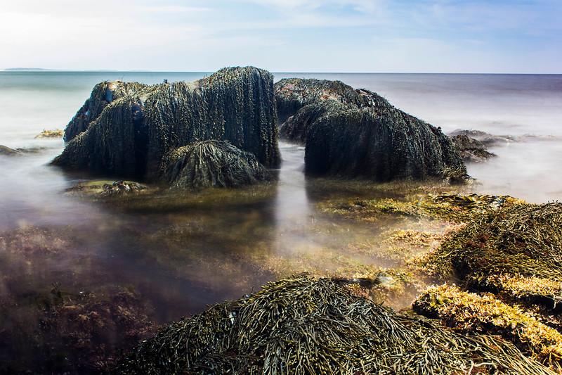 kelprocks.jpg