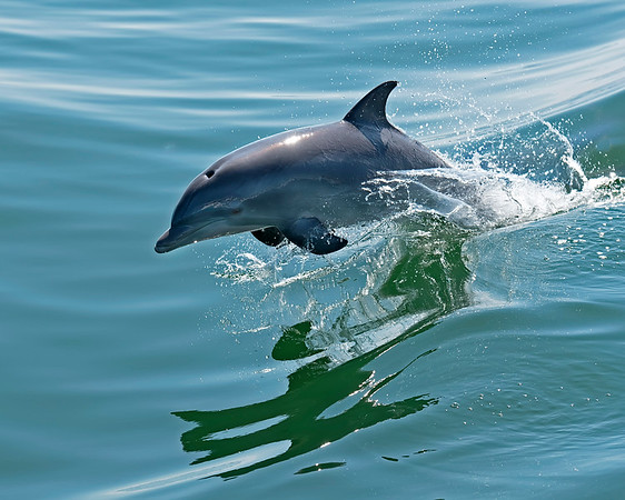 Dolphins and Sea Creatures of Virginia Beach