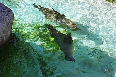 Zoo 2008