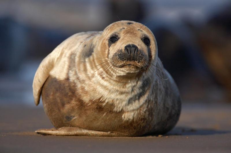 Seal - 7872 (2).jpg