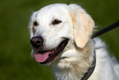 Stamford UK Dog Show