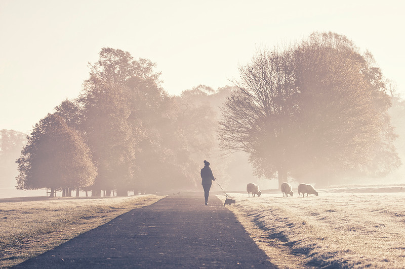 A cold and misty morning