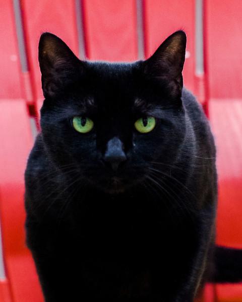 20140423SCPA midnight black cat  20.jpg