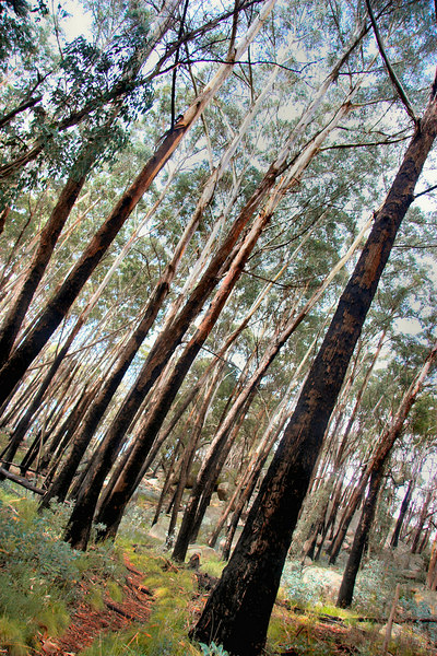 Burnt trees, on the walk to View Point.