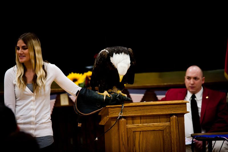 martin eagle-21.jpg