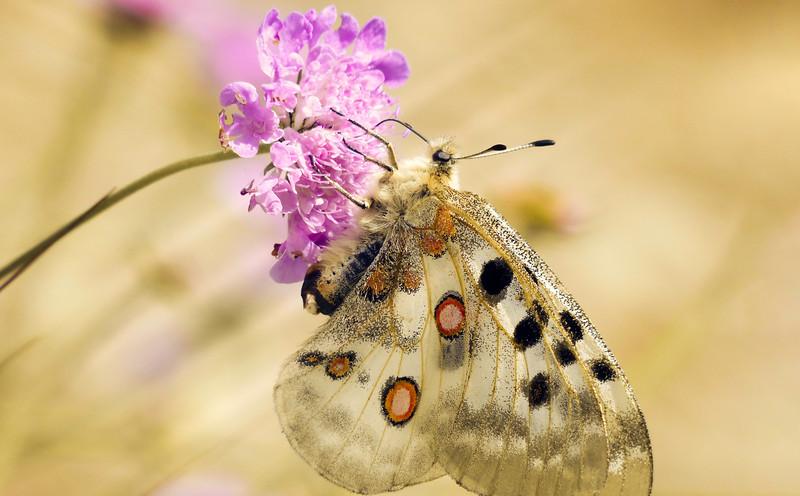 Butterfly-081.jpg