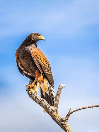 ASDM Birds 3-21-2018f-6975.jpg