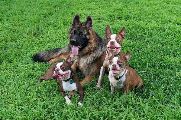 Puppy Pack
