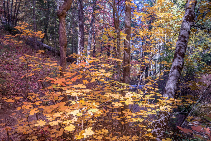 Mt Lemmon Colors 10-23-2017d.jpg