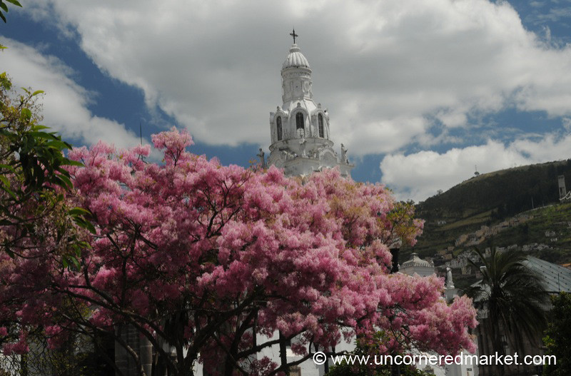 Burst of Color in Front of Quito's Cathedral