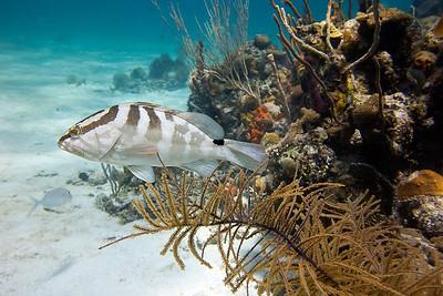 Nassau Dive