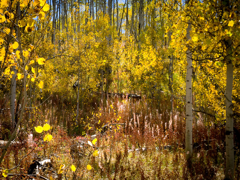 'Forest Magick' - Shadow Mountain, Wyoming, USA
