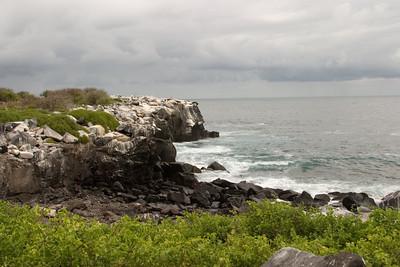 Punta Suarez, Espanola Island