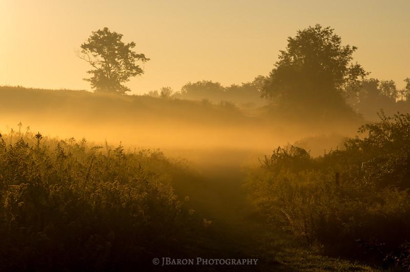 Foggy Goldenrod Field at Sunrise
