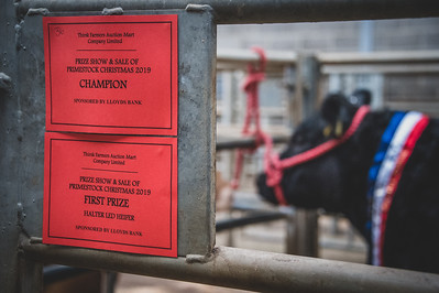 Thirsk Auction Mart Christmas Show and Sale 2019