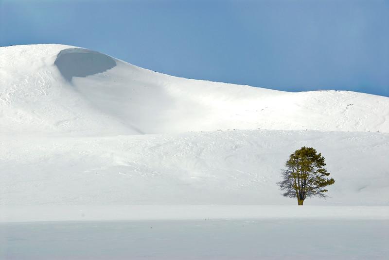Yellowstone Landscapes-5.jpg