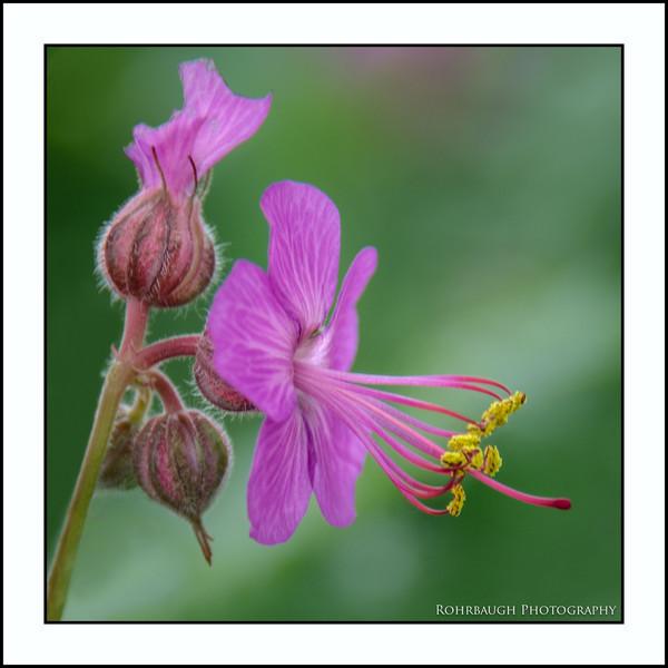 Rohrbaugh Photography Flowers 100.jpg