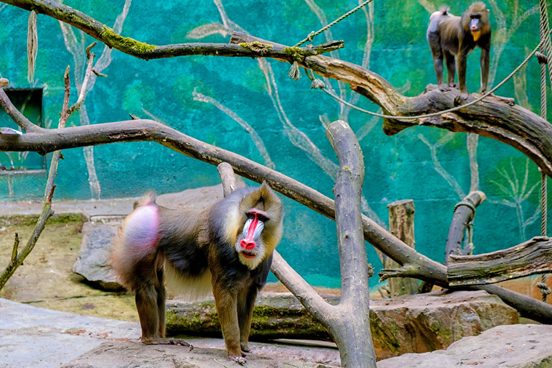 Zoo Duisberg_21 mei 2017_DSCF9375-bewerkt.jpg