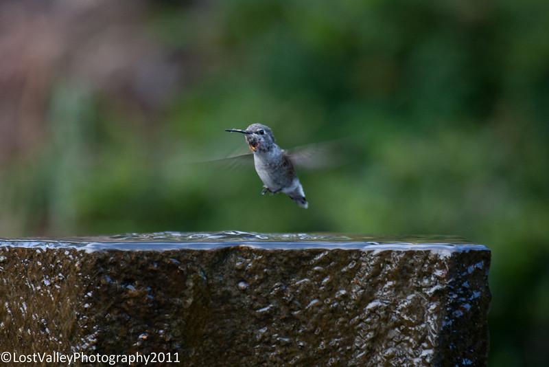 Birds and Fountain-2959.jpg