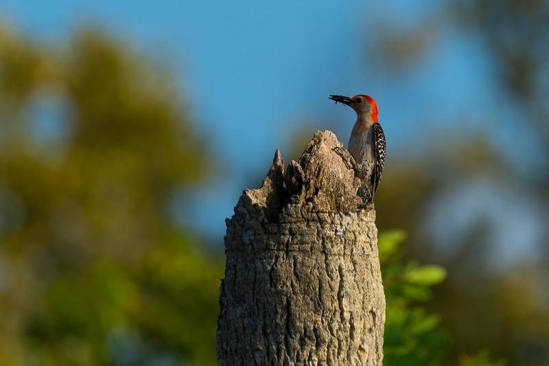 Everglades (29 of 37).jpg