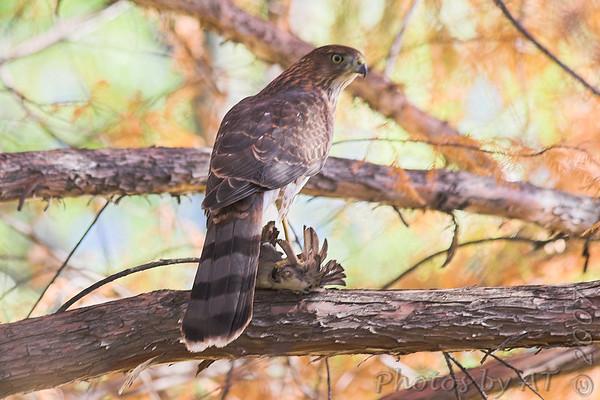 Birding 2007 Aug Sept Oct Nov