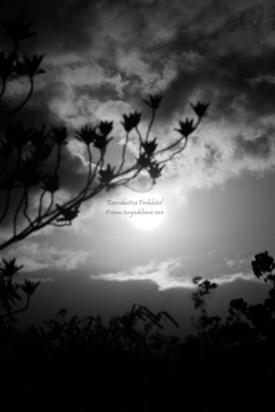 Haleakala Moonrise
