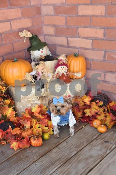 Elli Sophia's Halloween Pics.