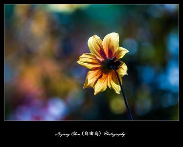 Unknown-flower 40