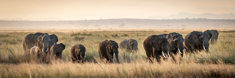 Elephants in the Grass (1 of 1).jpg