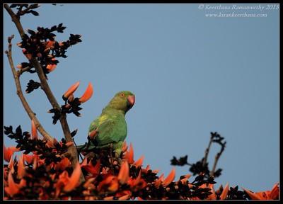 India Feb 2015 - Birds