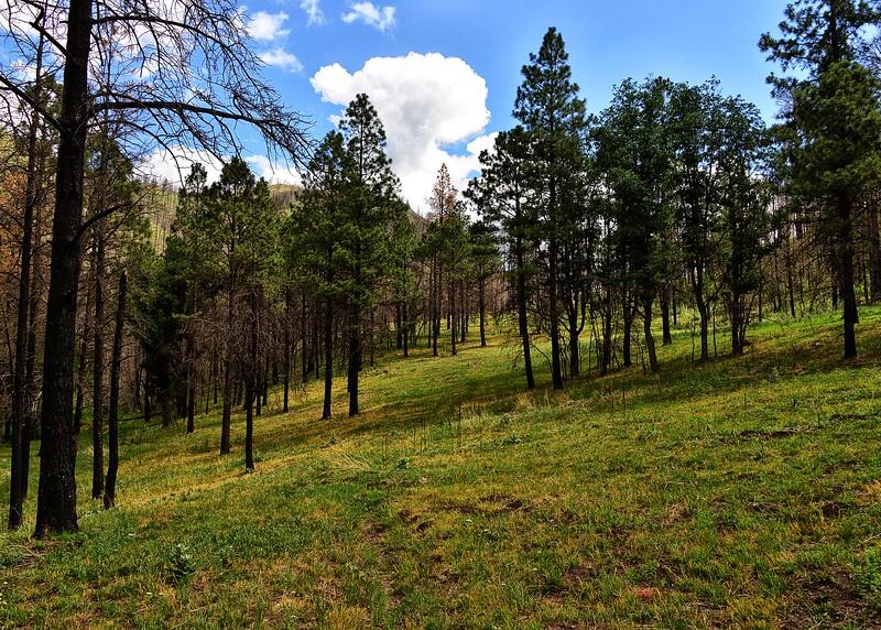 NEA_0401-7x5-Southfork Trail.jpg