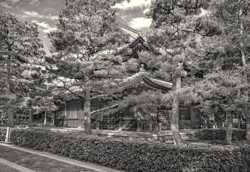 Daotokuji Temple. Pines # 1