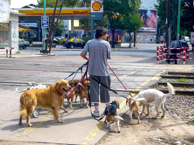 ba dog walker.jpg